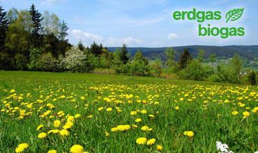 Wiese mit gelben Blumen und erdgas biogas logo